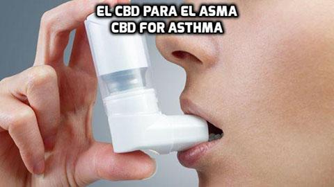 Lee más sobre el artículo El CBD para el Asma