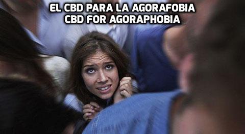 Lee más sobre el artículo El CBD para la Agorafobia