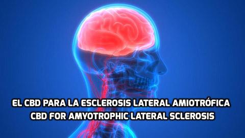 Lee más sobre el artículo El CBD para La Esclerosis Lateral Amiotrófica (ELA)