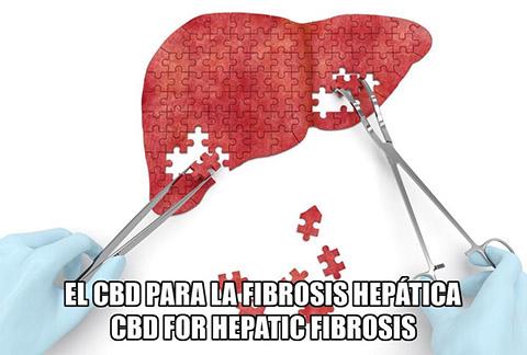 Lee más sobre el artículo El CBD para la Fibrosis Hepática