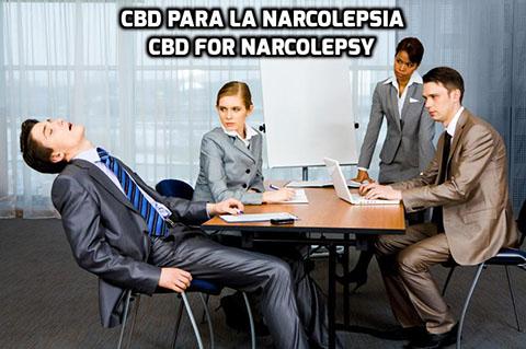 Lee más sobre el artículo El CBD para la Narcolepsia