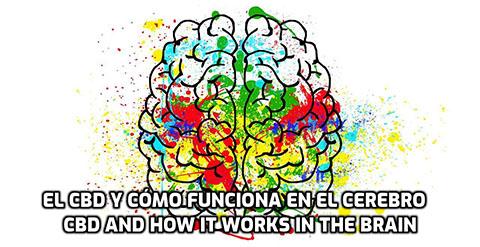 Lee más sobre el artículo El CBD y cómo funciona en el Cerebro