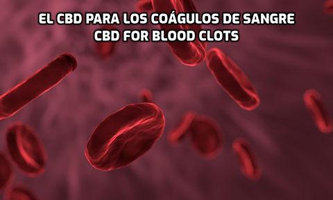 Lee más sobre el artículo El CBD para los Coágulos de Sangre