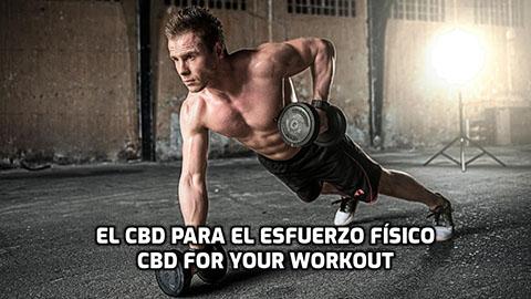 Lee más sobre el artículo El CBD para antes, durante y después del esfuerzo físico