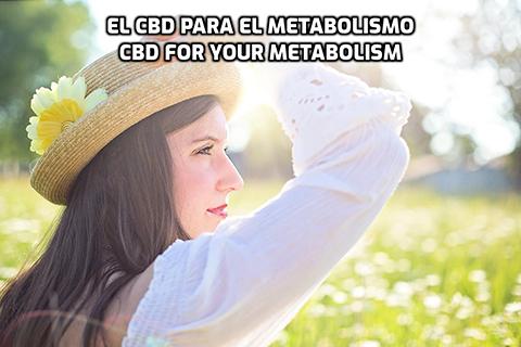 En este momento estás viendo El CBD para el Metabolismo