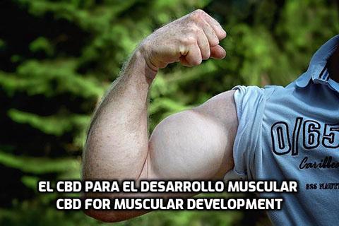 Lee más sobre el artículo El CBD para el Desarrollo Muscular