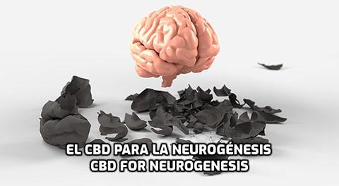En este momento estás viendo El CBD para la Neurogénesis