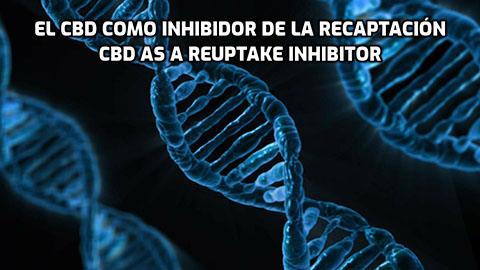 El CBD como inhibidor de la recaptación